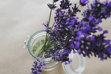 Fresh Lavender – Like the Smell of Summer